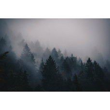 DREAM  NATURE 028